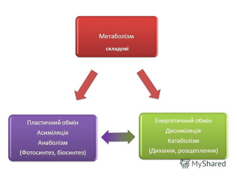 Метаболізм Енергетичний обмін Дисиміляція Катаболізм (Дихання, розщеплення) Пластичний обмін Асиміляція Анаболізм (Фотосинтез, біосинтез) складові