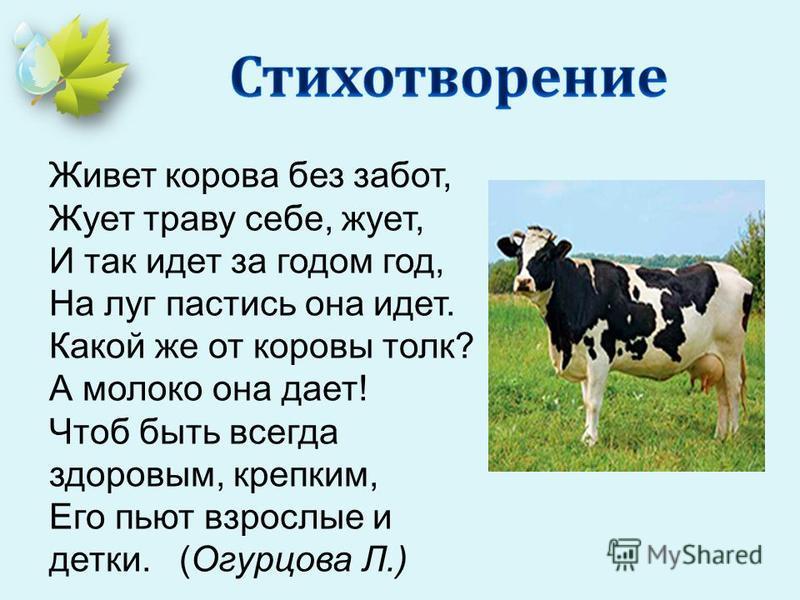 Живет корева без забот, Жует траву себе, жует, И так идет за годом год, На луг пастись она идет. Какой же от коровы толк? А молоко она дает! Чтоб быть всегда здоровым, крепким, Его пьют взрослые и детки. (Огурцова Л.)