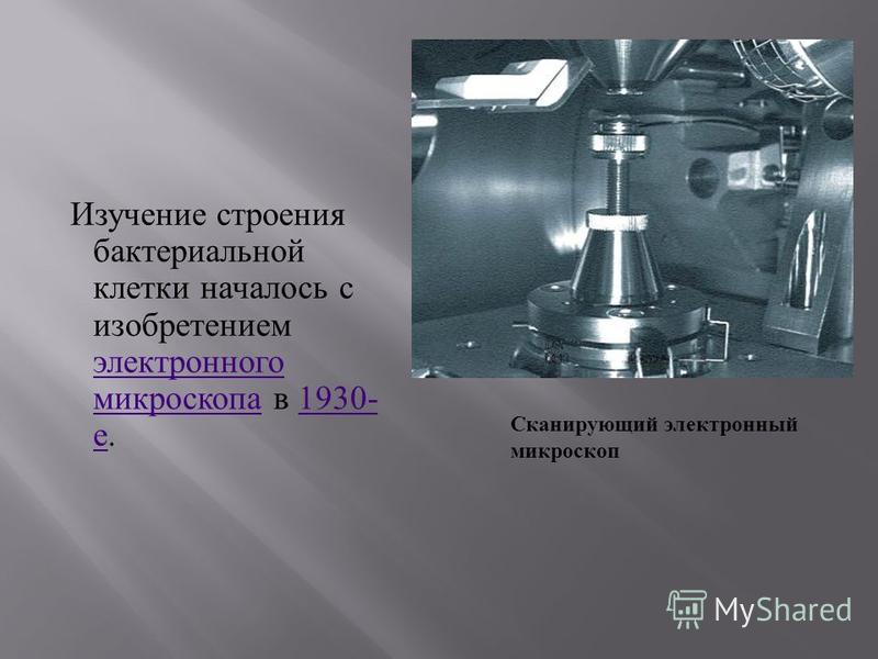 Изучение строения бактериальной клетки началось с изобретением электронного микроскопа в 1930- е. электронного микроскопа 1930- е Сканирующий электронный микроскоп