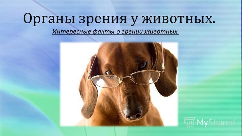 Органы зрения у животных. Интересные факты о зрении животных.
