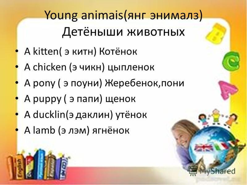 Young animais(янг энималз) Детёныши животных A kitten( э китн) Котёнок A chicken (э чикн) цыпленок A pony ( э поуни) Жеребенок,пони A puppy ( э папе) щенок A ducklin(э жаклин) утёнок A lamb (э лем) ягнёнок