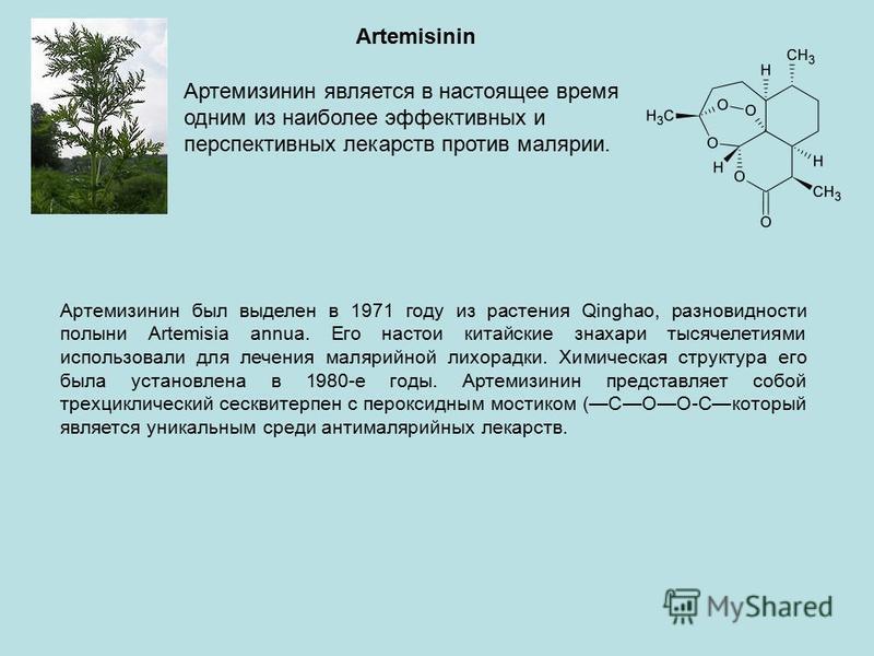 Artemisinin Артемизинин является в настоящее время одним из наиболее эффективных и перспективных лекарств против малярии. Артемизинин был выделен в 1971 году из растения Qinghao, разновидности полыни Artemisia annua. Его настои китайские знахари тыся