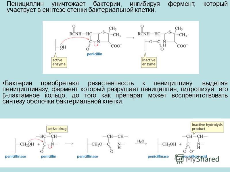 Пенициллин уничтожает бактерии, ингибируя фермент, который участвует в синтезе стенки бактериальной клетки. Бактерии приобретают резистентность к пенициллину, выделяя пенициллиназу, фермент который разрушает пенициллин, гидролизуя его -лактамное коль