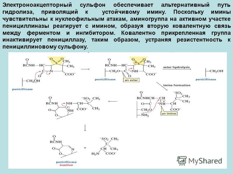 Электроноакцепторный сульфон обеспечивает альтернативный путь гидролиза, приволящий к устойчивому имину. Поскольку имины чувствительны к нуклеофильным атакам, аминогруппа на активном участке пенициллиназы реагирует с имином, образуя вторую ковалентну