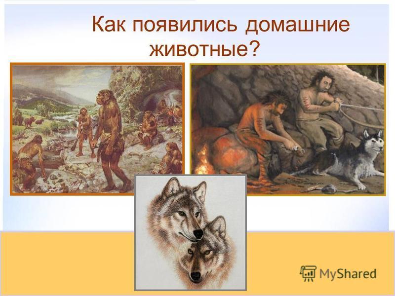 Как появились домашние животные?