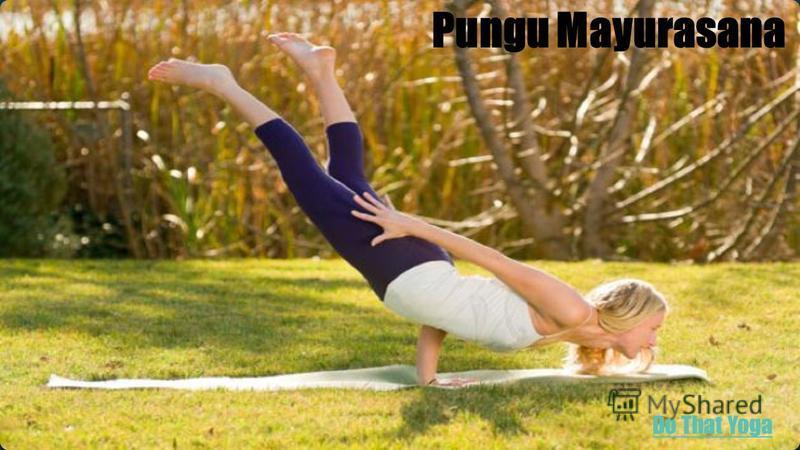 Pungu Mayurasana Do That Yoga