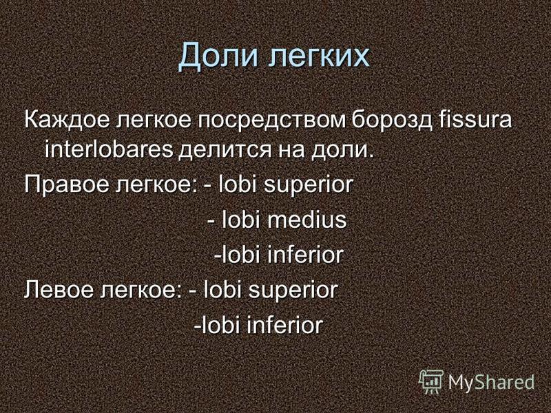 Доли легких Каждое легкое посредством борозд fissura interlobares делится на доли. Правое легкое: - lobi superior - lobi medius - lobi medius -lobi inferior -lobi inferior Левое легкое: - lobi superior -lobi inferior -lobi inferior