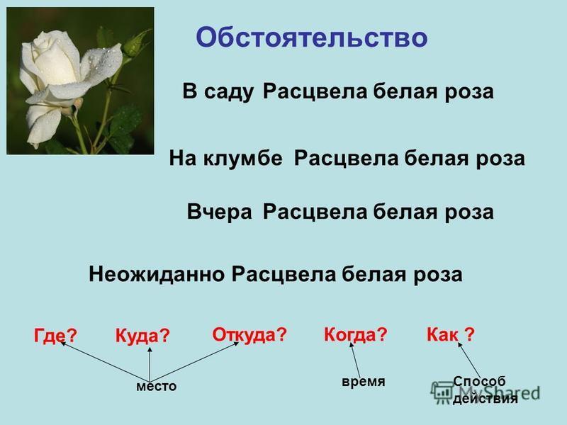Обстоятельство Расцвела белая роза В саду На клумбе Вчера Неожиданно Где?Куда? Откуда?Когда?Как ? место время Способ действия