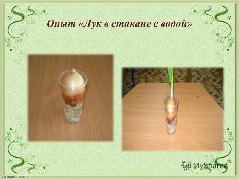 Опыт « Лук в стакане с водой »