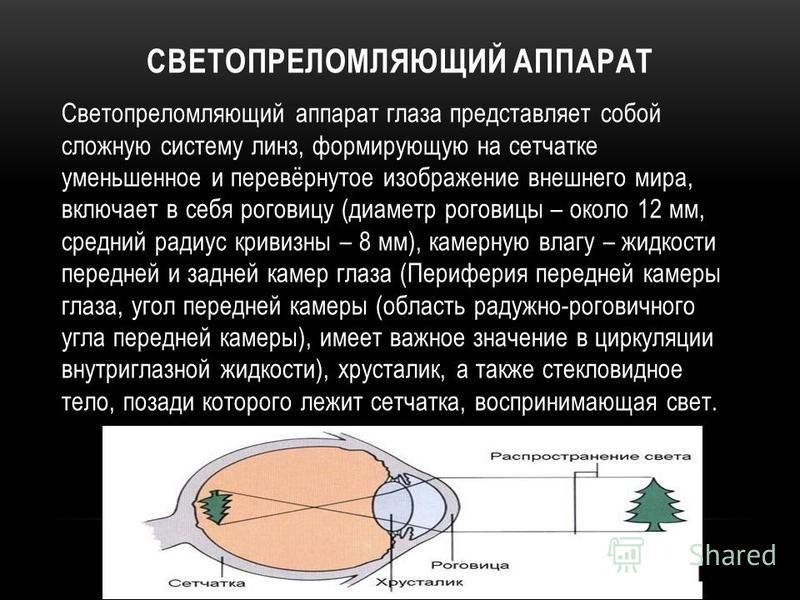 СВЕТОПРЕЛОМЛЯЮЩИЙ АППАРАТ Светопреломляющий аппарат глаза представляет собой сложную систему линз, формирующую на сетчатке уменьшенное и перевёрнутое изображение внешнего мира, включает в себя роговицу (диаметр роговицы – около 12 мм, средний радиус
