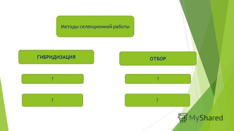Методы селекционной работы ОТБОР ГИБРИДИЗАЦИЯ ? ? ? ?
