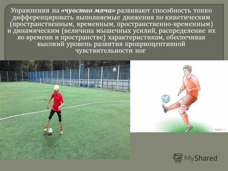 Упражнения на « чувство мяча » развивают способность тонко дифференцировать выполняемые движения по кинетическим ( пространственным, временным, пространственно - временным ) и динамическим ( величина мышечных усилий, распределение их во времени и про