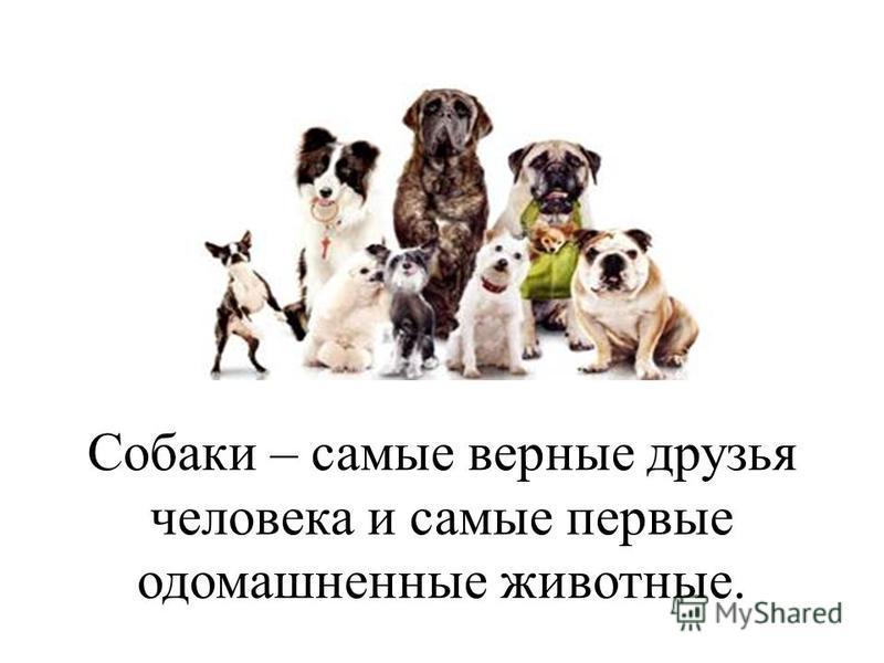 Собаки – самые верные друзья человека и самые первые одомашненные животные.