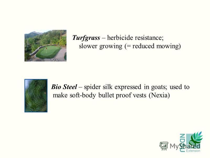 NDSU Extension Turfgrass – herbicide resistance; slower growing (= reduced mowing) Bio Steel – spider silk expressed in goats; used to make soft-body bullet proof vests (Nexia)
