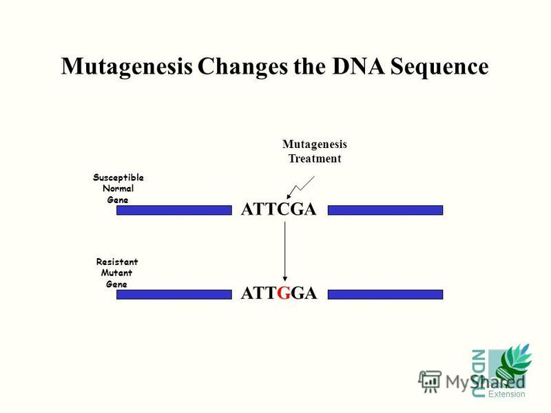 NDSU Extension ATTCGA ATTGGA Susceptible Normal Gene Resistant Mutant Gene Mutagenesis Treatment Mutagenesis Changes the DNA Sequence