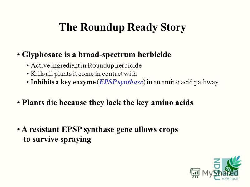 NDSU Extension The Roundup Ready Story Glyphosate is a broad-spectrum herbicide Active ingredient in Roundup herbicide Kills all plants it come in contact with Inhibits a key enzyme (EPSP synthase) in an amino acid pathway Plants die because they lac
