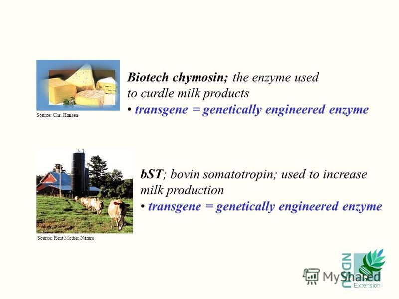 NDSU Extension Biotech chymosin; the enzyme used to curdle milk products transgene = genetically engineered enzyme bST; bovin somatotropin; used to increase milk production transgene = genetically engineered enzyme Source: Rent Mother Nature Source:
