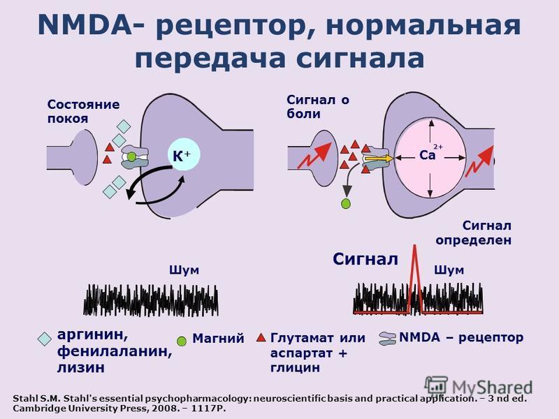 NMDA- рецептор, нормальная передача сигнала 2+ Ca Сигнал определен Сигнал о боли К+К+ Состояние покоя Шум Сигнал Шум NMDA – рецептор Магний Глутамат или аспартат + глицин аргинин, фенилаланин, лизин Stahl S.M. Stahl's essential psychopharmacology: ne