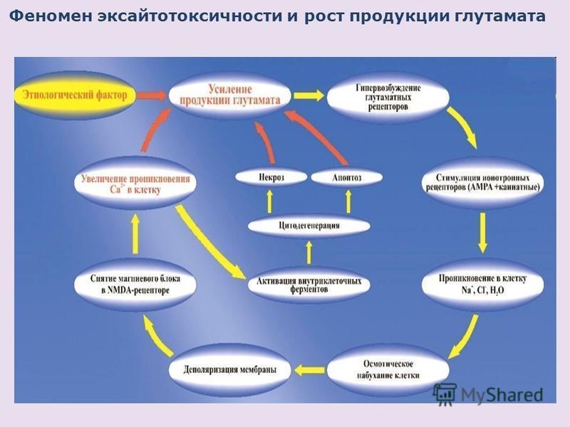 Феномен эксайтотоксичности и рост продукции глутамата