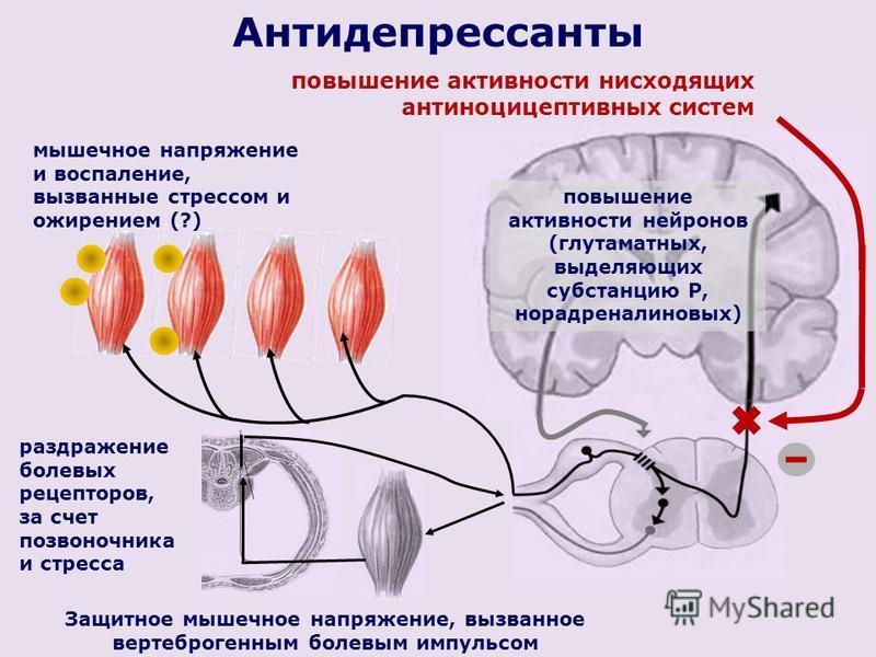 Антидепрессанты Защитное мышечное напряжение, вызванное вертеброгенным болевым импульсом повышение активности нейронов (глутаматных, выделяющих субстанцию Р, норадреналин новых) повышение активности нисходящих антиноцицептивных систем раздражение бол