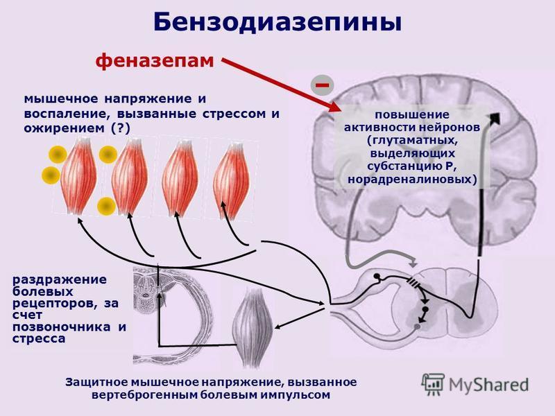Защитное мышечное напряжение, вызванное вертеброгенным болевым импульсом повышение активности нейронов (глутаматных, выделяющих субстанцию Р, норадреналин новых) Бензодиазепины феназепам раздражение болевых рецепторов, за счет позвоночника и стресса