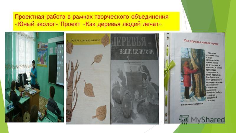 Проектная работа в рамках творческого объединения «Юный эколог» Проект «Как деревья людей лечат»