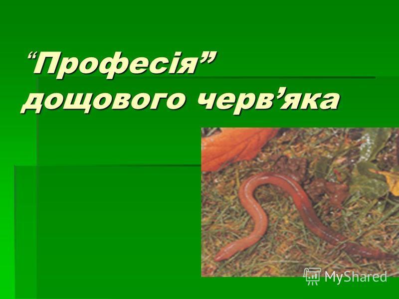Професія дощового червяка Професія дощового червяка