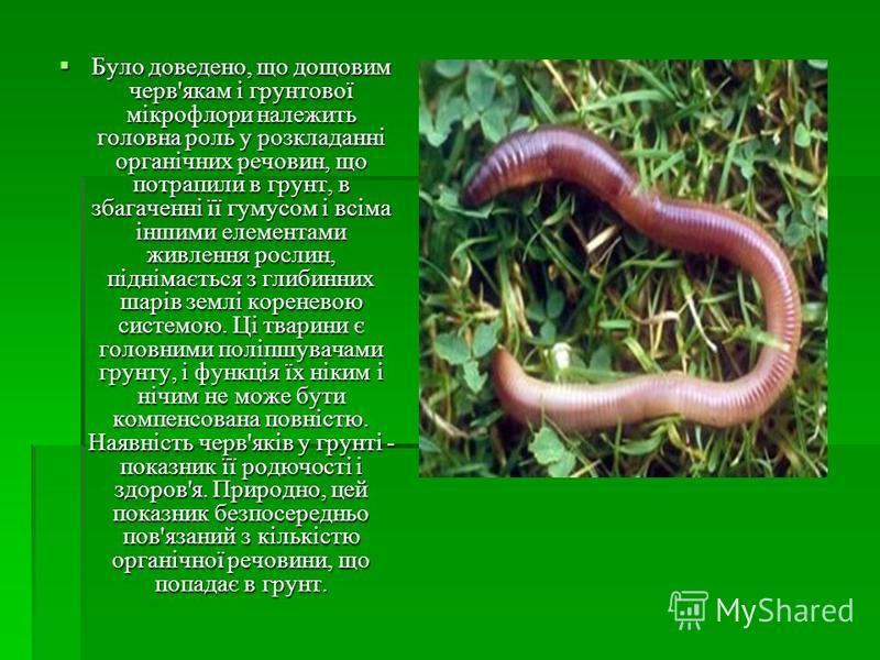 Було доведено, що дощовим черв'якам і грунтової мікрофлори належить головна роль у розкладанні органічних речовин, що потрапили в грунт, в збагаченні її гумусом і всіма іншими елементами живлення рослин, піднімається з глибинних шарів землі кореневою