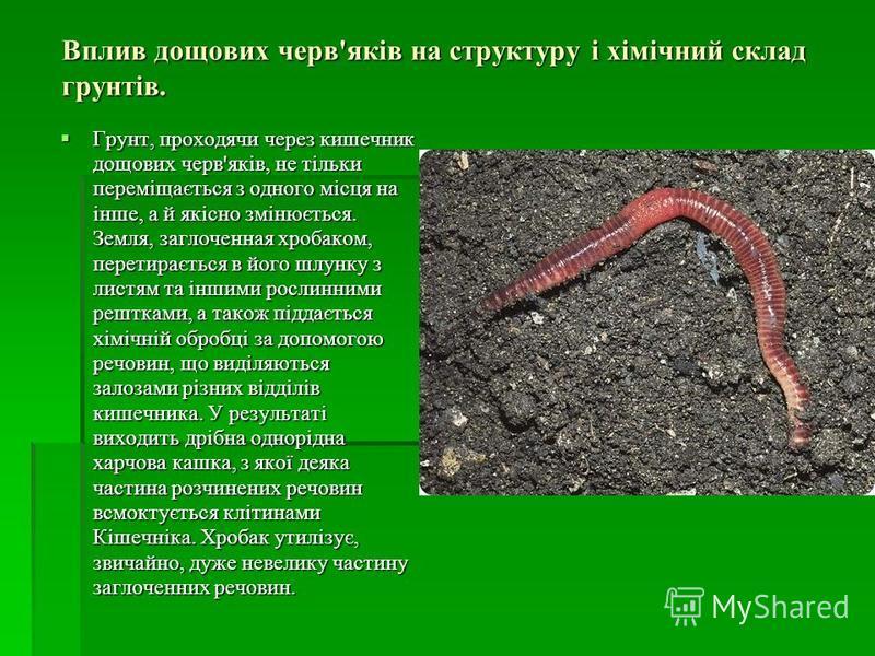Вплив дощових черв'яків на структуру і хімічний склад грунтів. Грунт, проходячи через кишечник дощових черв'яків, не тільки переміщається з одного місця на інше, а й якісно змінюється. Земля, заглоченная хробаком, перетирається в його шлунку з листям