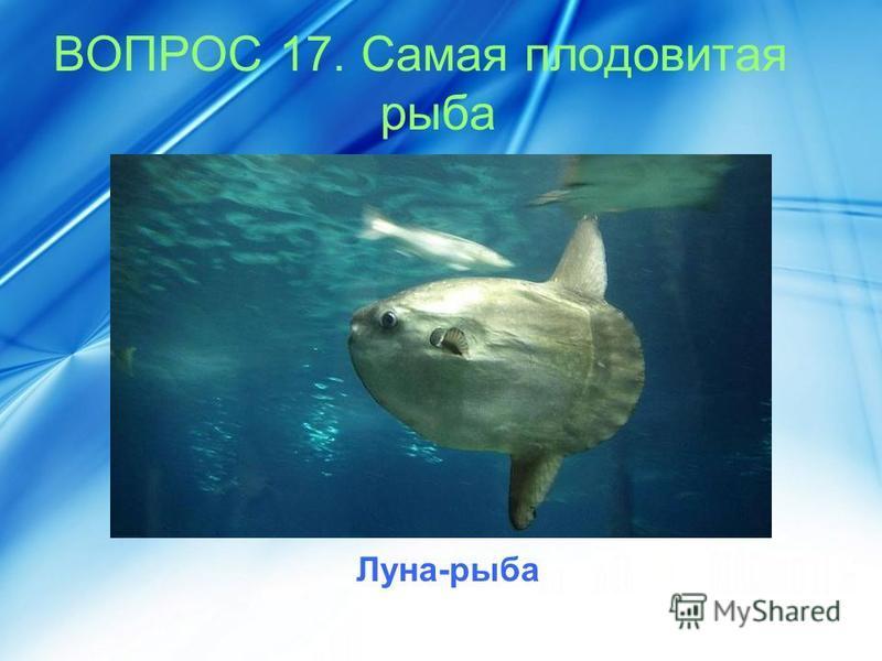 ВОПРОС 17. Самая плодовитая рыба Луна-рыба