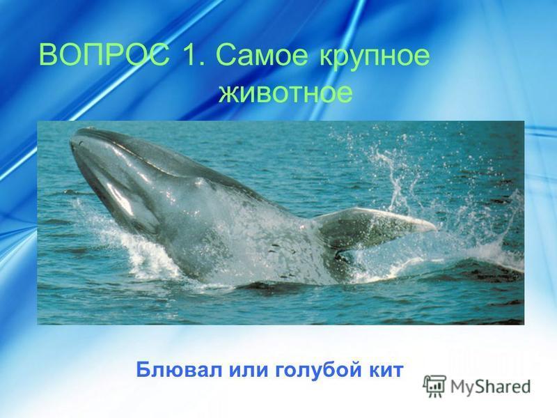 ВОПРОС 1. Самое крупное животное Блювал или голубой кит