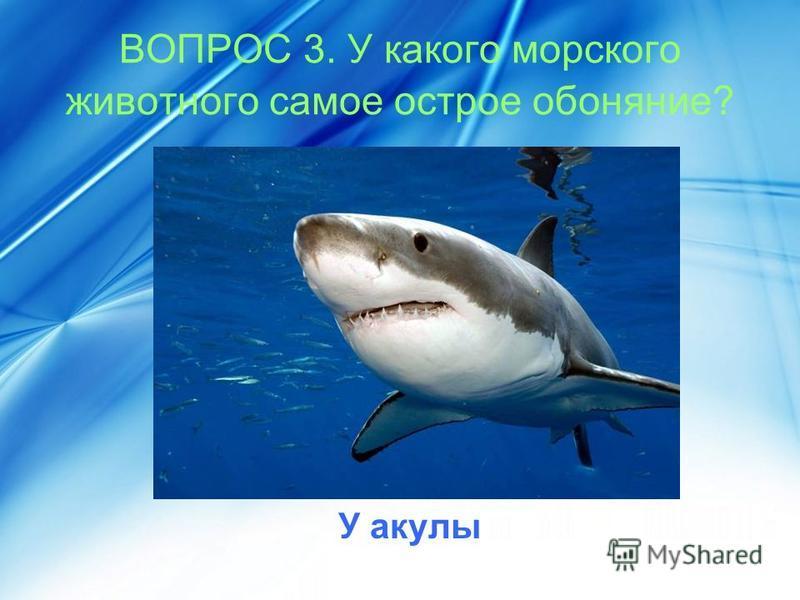 ВОПРОС 3. У какого морского животного самое острое обоняние? У акулы