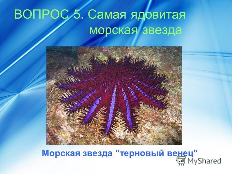 ВОПРОС 5. Самая ядовитая морская звезда Морская звезда терновый венец