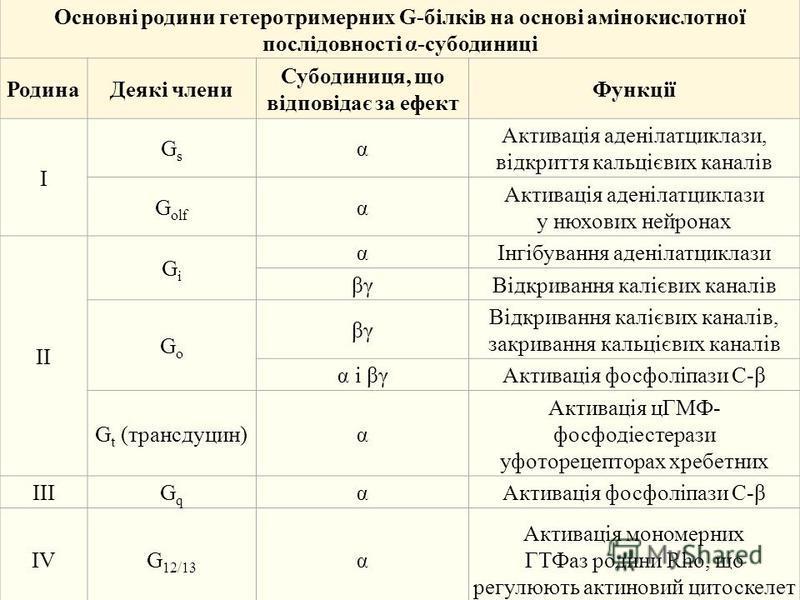 Основні родини гетеротримерних G-білків на основі амінокислотної послідовності α-субодиниці РодинаДеякі члени Субодиниця, що відповідає за ефект Функції I GsGs α Активація аденілатциклази, відкриття кальцієвих каналів G olf α Активація аденілатциклаз