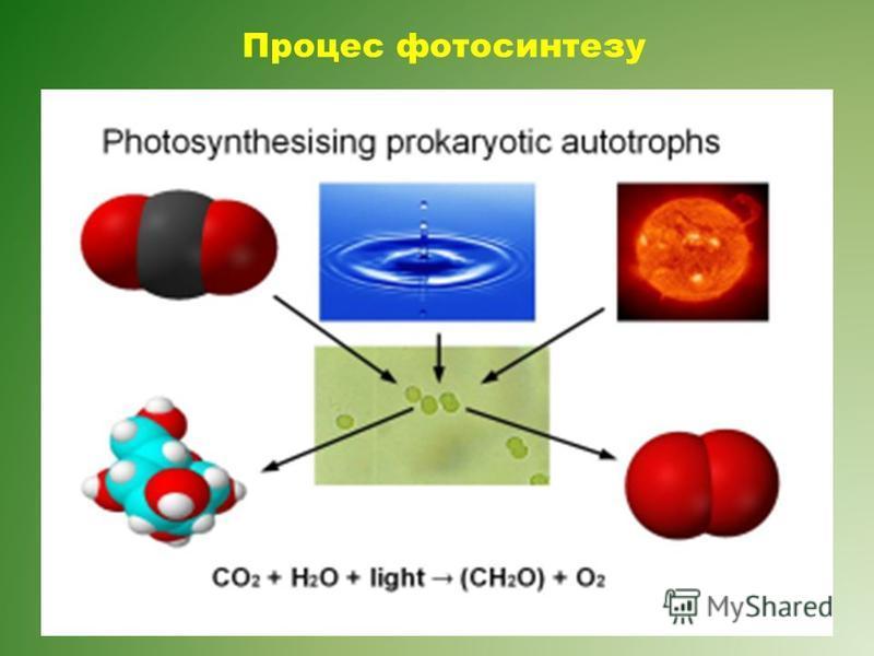 Процес фотосинтезу