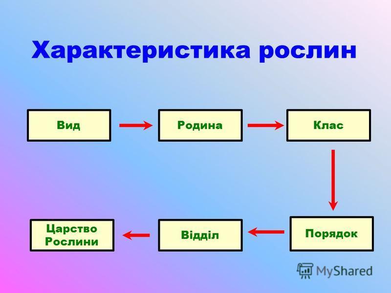Характеристика рослин ВидРодинаКлас Порядок Відділ Царство Рослини