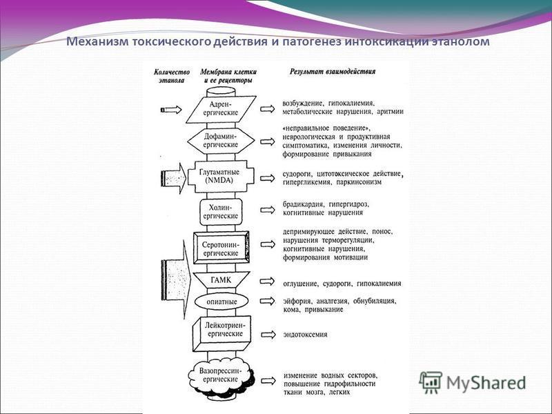Механизм токсического действия и патогенез интоксикацииии этанолом