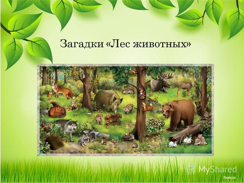 Загадки «Лес животных»