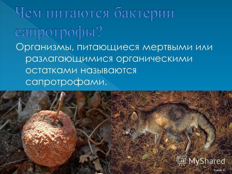 Организмы, питающиеся мертвыми или разлагающимися органическими остатками называются сапроторфами.