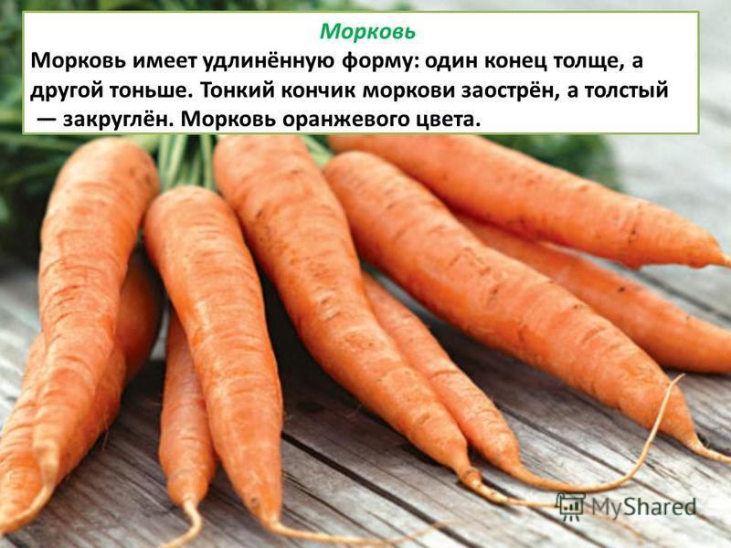 Морковь Морковь имеет удлинённую форму: один конец толще, а другой тоньше. Тонкий кончик моркови заострён, а толстый закруглён. Морковь оранжевого цвета.