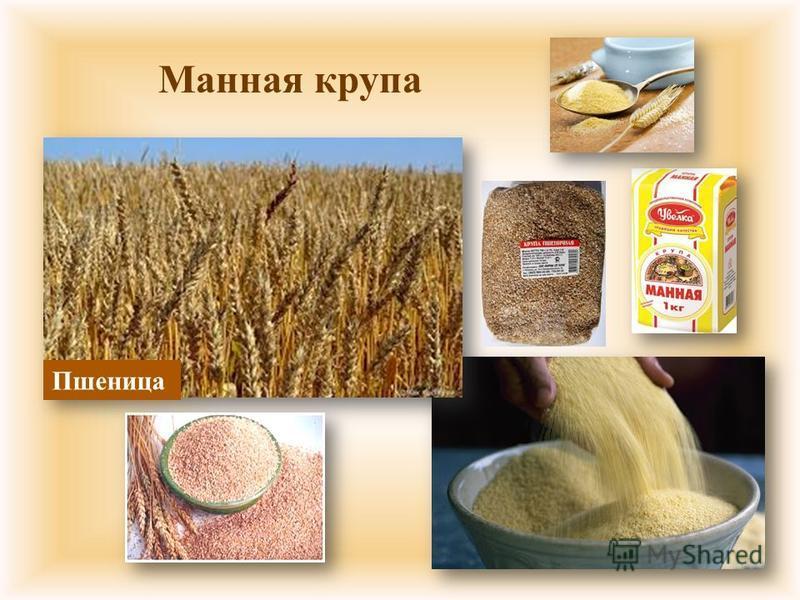 Манная крупа Пшеница