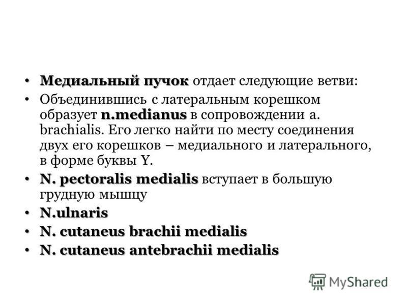 Медиальный пучок Медиальный пучок отдает следующие ветви: n.medianus Объединившись с латеральным корешком образует n.medianus в сопровождении a. brachialis. Его легко найти по месту соединения двух его корешков – медиального и латерального, в форме б