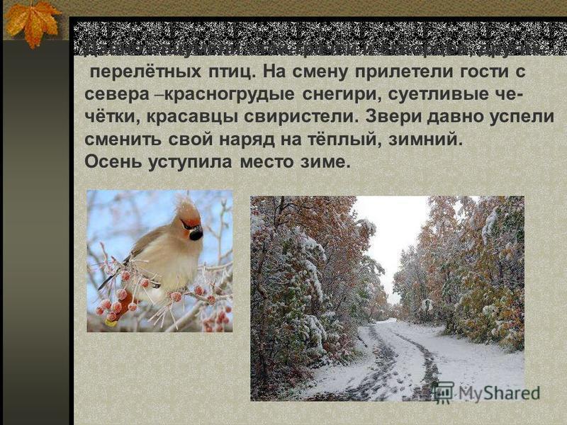 Давно отшумели стаи грачей и скворцов, других перелётных птиц. На смену прилетели гости с севера – красногрудые снегири, суетливые че- чётки, красавцы свиристели. Звери давно успели сменить свой наряд на тёплый, зимний. Осень уступила место зиме. Дав