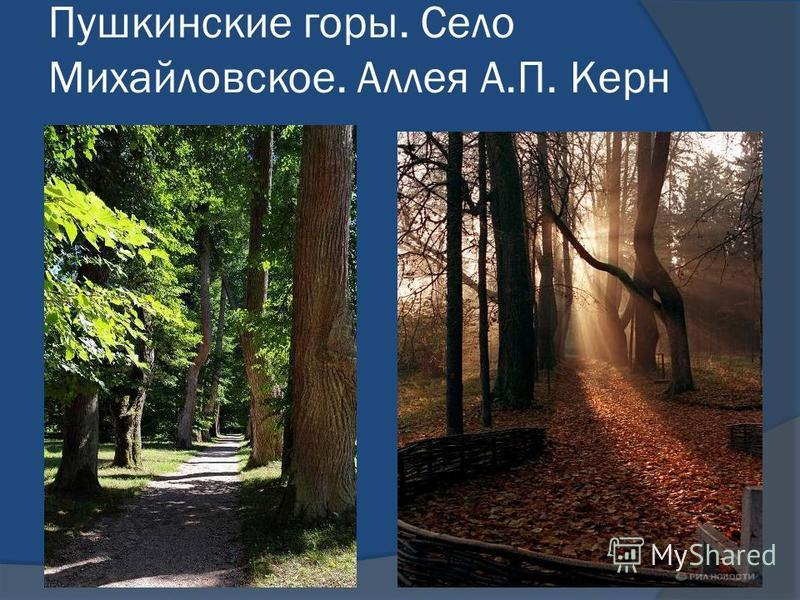 Пушкинские горы. Село Михайловское. Аллея А.П. Керн