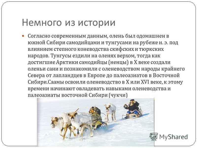 Немного из истории Согласно современным данным, олень был одомашнен в южной Сибири самодийцами и тунгусами на рубеже н. э. под влиянием степного коневодства скифских и тюркских народов. Тунгусы ездили на оленях верхом, тогда как достигшие Арктики сам