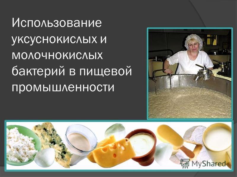 Использование уксуснокислых и молочнокислых бактерий в пищевой промышленности