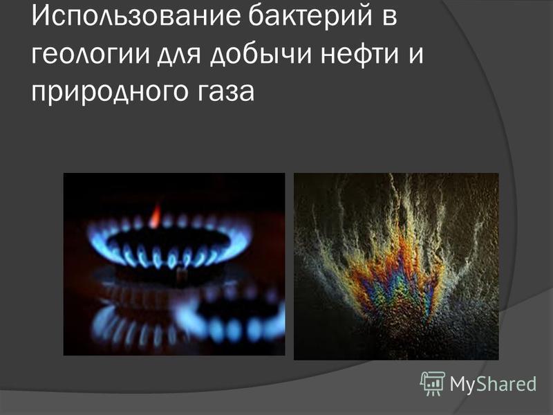Использование бактерий в геологии для добычи нефти и природного газа