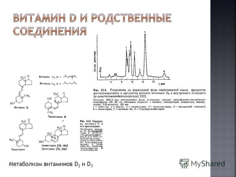 Метаболизм витаминов D 2 и D 3