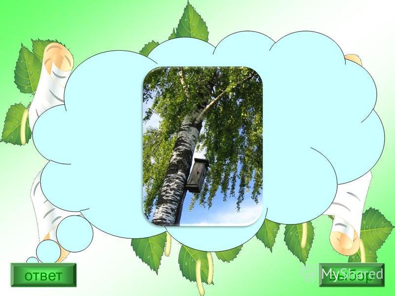 Укажи название дерева: Дотронься летом до ствола этого дерева. Он прохладный даже на солнцепёке. Такое может быть только у одного дерева: ведь это единственное дерево, с корой, которая не нагревается на солнце. 1) клён 2) берёза 3) сосна ответ выбор