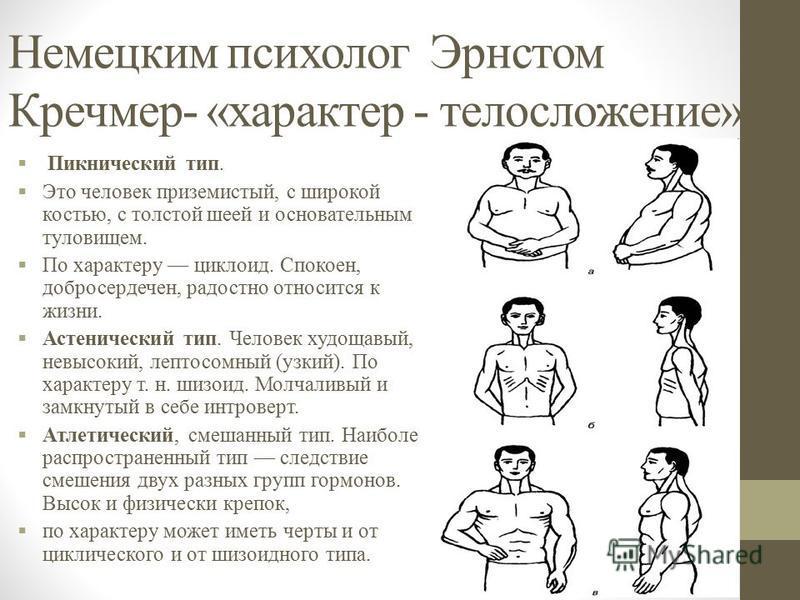 Немецким психолог Эрнстом Кречмер- «характер - телосложение». Пикнический тип. Это человек приземистый, с широкой костью, с толстой шеей и основательным туловищем. По характеру циклоид. Спокоен, добросердечен, радостно относится к жизни. Астенический
